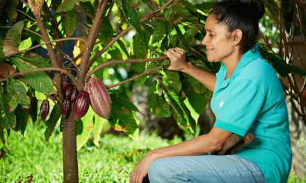 Gender Inequality in Cacao Farming