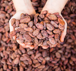 Enliven Cacao – Inside Chocolate Preview