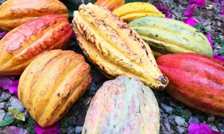 Dandelion Chocolate Trips: Belize – Inside Chocolate